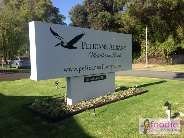 Pelicans-Albany-1