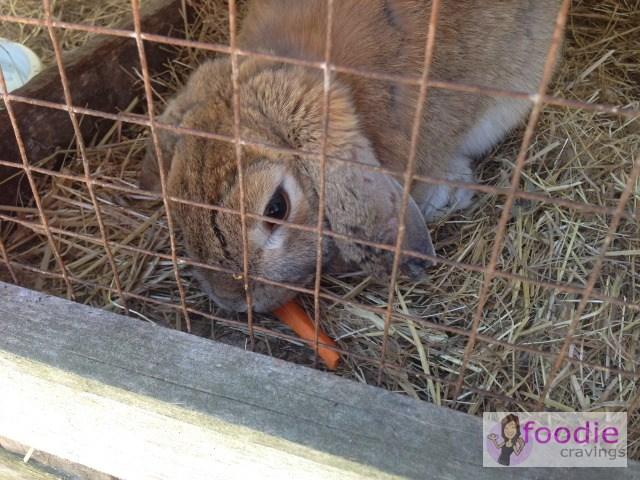 TGS14-The-Old-Marron-Farm_animals-2
